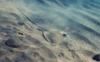 Berthold Raadsen - Snorkelen op Saba
