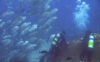 Joeri De Paepe - Hamerhaaienparadijs Cocos Island