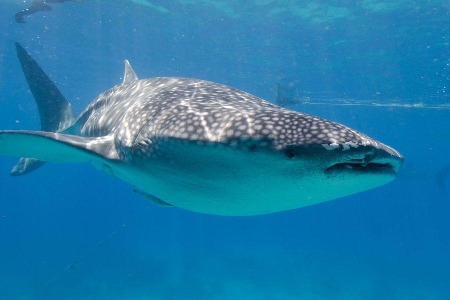 Rob de Vries, Moalboal, april 2012-259Magic-Oceans
