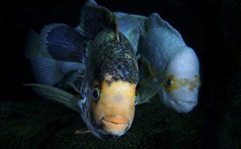 Nieuw! Flitsbijlagen bij Handboek onderwaterfotografie