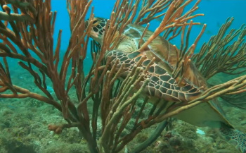 Video - Arashi Reef, Aruba