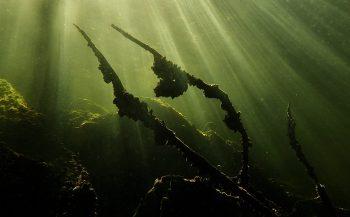Berthold Raadsen - Spiegelingen onder en boven water
