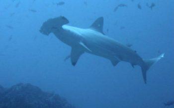Mijn eerste haai en de grootste haai