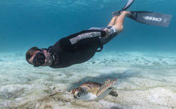 Freediven met Aruba's schildpadden