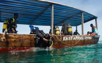 Zanzibar en het zeepaard in maatje 3XL