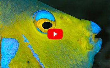 Bonaire, een uniek Diver's Paradise