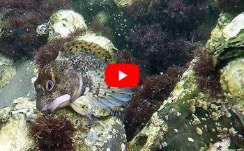 Dirk Van den Bergh - Het leukste visje van Zeeland