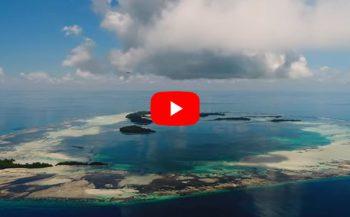 Wat is de Save Our Seas Foundation?