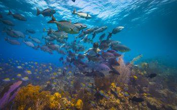 Belize - 'We zien je snel weer'