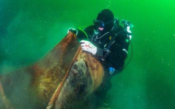 Blog: Zeilen of toch Duik de Noordzee schoon?