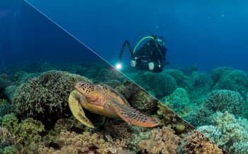 Workshop Photoshop/beeldbewerking voor onderwaterfotografen bij Onderwaterhuis.NL