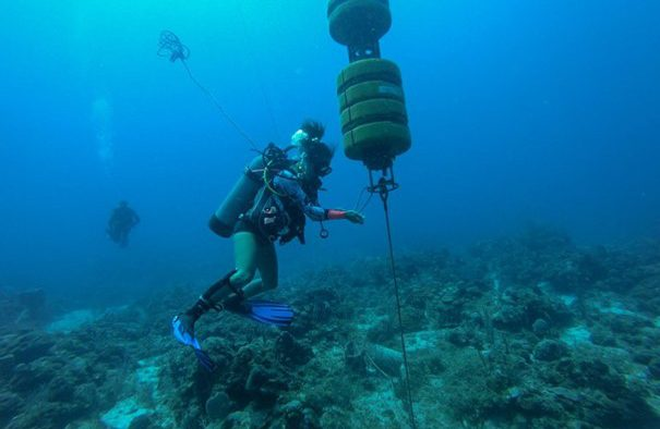 Hydrofoons (onderwatermicrofoons) op de Sababank nemen geluiden op van een verscheidenheid aan mariene soorten, zoals walvissen, dolfijnen en scholen vissen (Bron: Ayumi Kuramae Izioka).