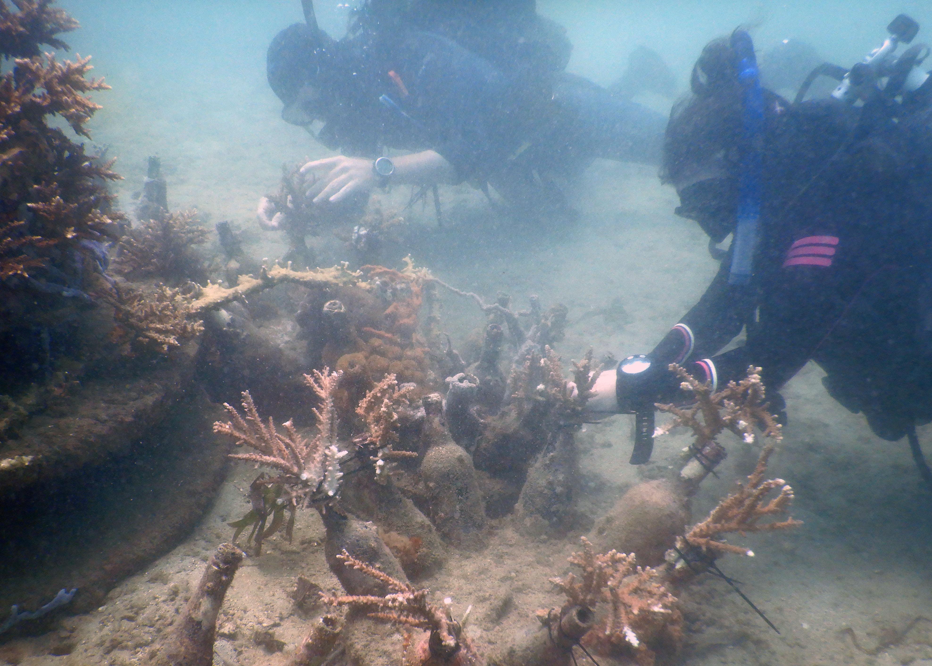 Peter_Vodegel-Outplanting_koraal-103352
