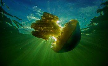 ONK Onderwaterfotografie 2020 - Teams