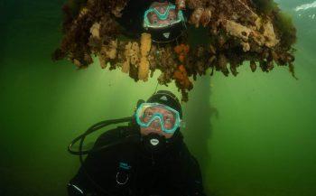 ONK Onderwaterfotografie 2020 - Starters - Beste foto