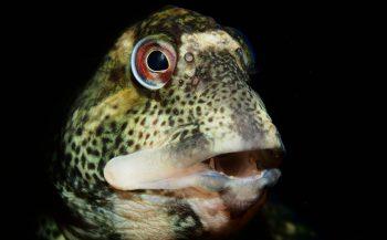 ONK Onderwaterfotografie 2020 - Masters - Visportret