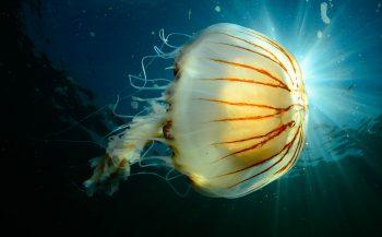 ONK Onderwaterfotografie 2020 - Masters - Groothoek