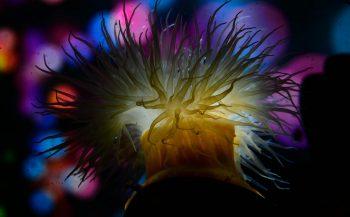 ONK Onderwaterfotografie 2020 - Masters - Thema Kleurrijk