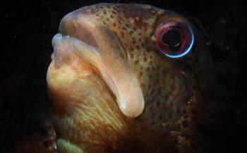 Thematafel - Onderwaterfotografie: de juiste belichting