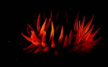 ONK Onderwaterfotografie 2020 - Starters - Thema Kleurrijk