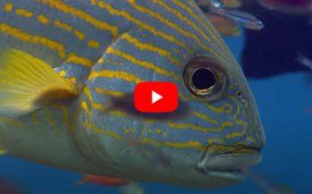 Film: Het koraalrif