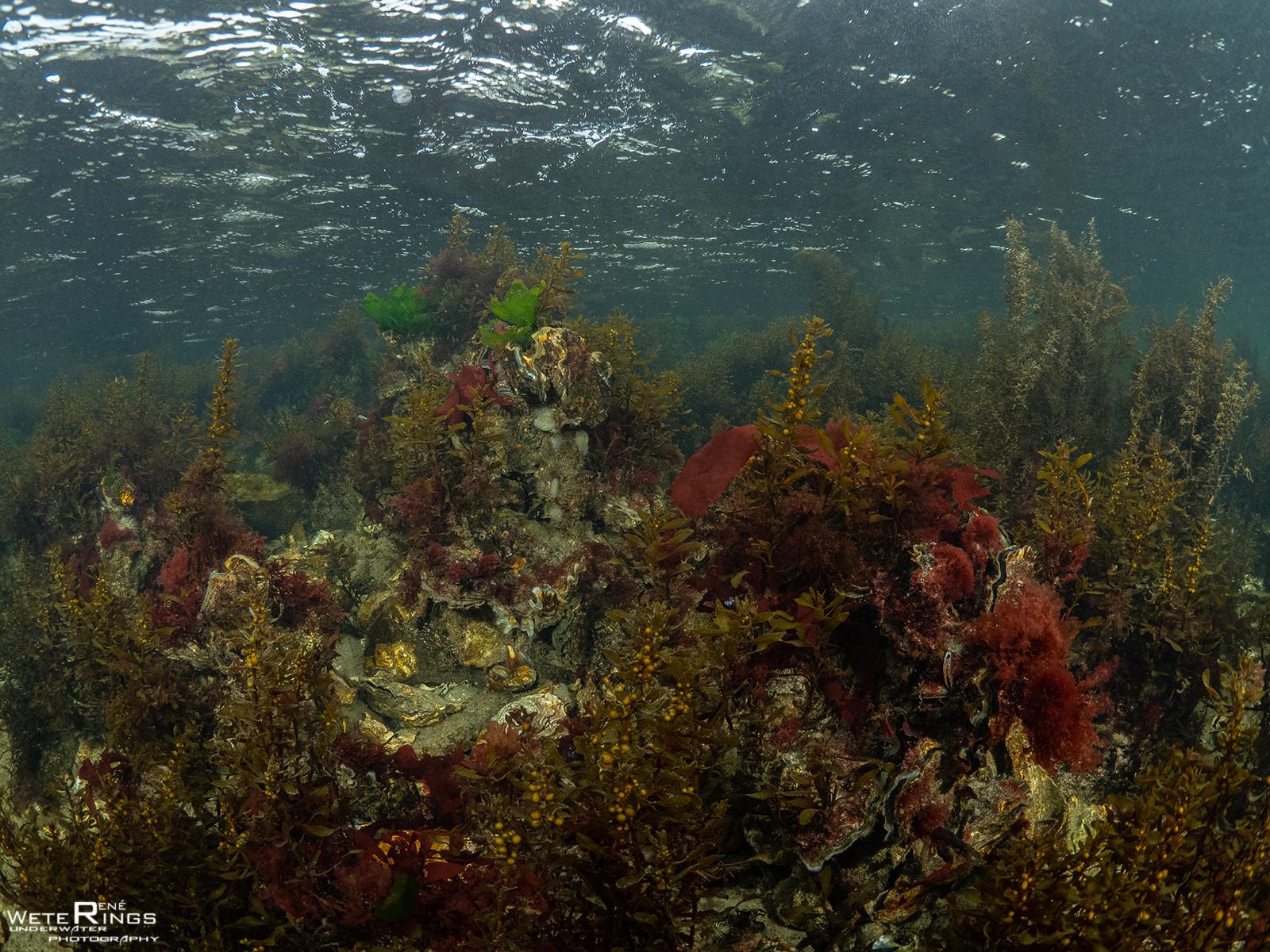 RENE_WETERINGS_20201021_998_Dreischor_Reefballs_0047_Landschap_wieren-103658