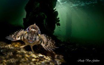 Steenslijmvis met double exposure - Het verhaal achter de foto