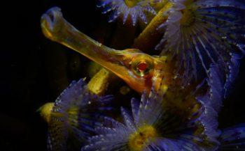 OBK Onderwaterfotografie 2020 - Masters - Portfolio