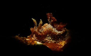 OBK Onderwaterfotografie 2020 - Masters - Categorieën