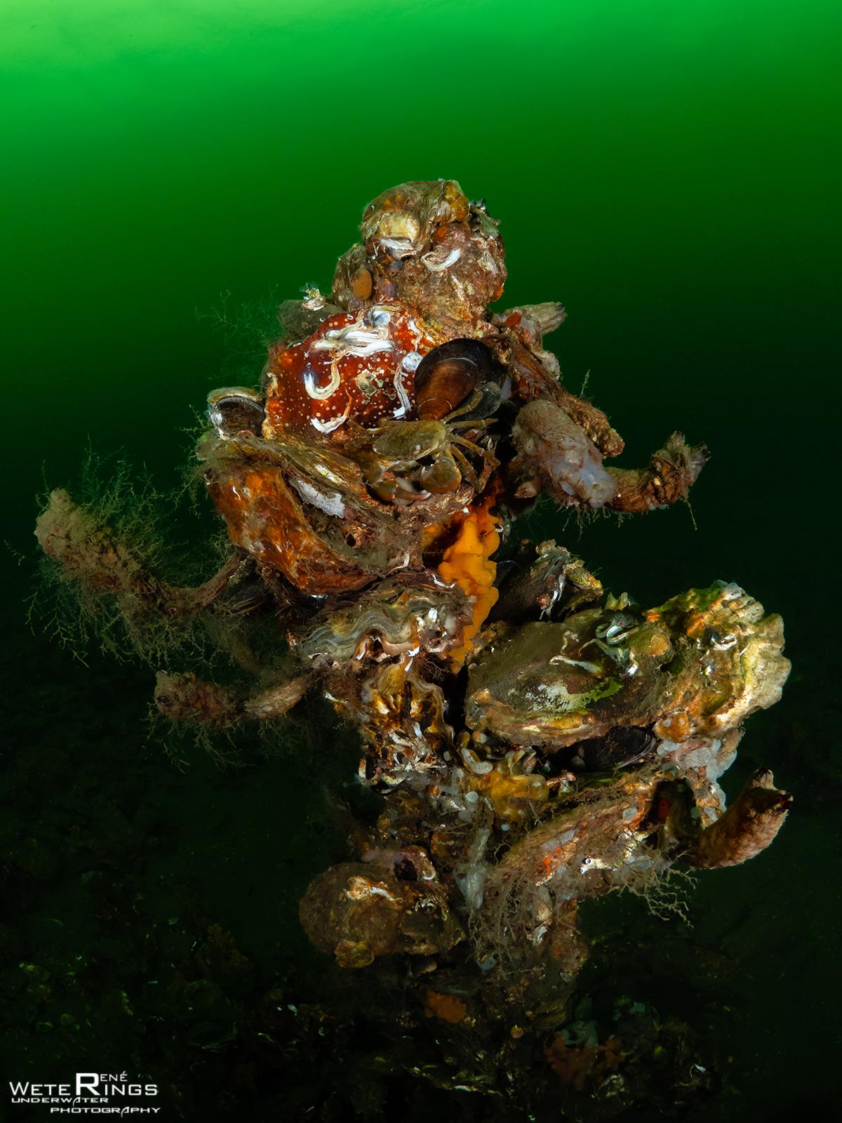 RENE_WETERINGS_20201129_1004_Dreischor_Reefballs_060_Krab_oesters-104939