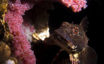 Zeedonderpad met dubbel nest - Het verhaal achter de foto