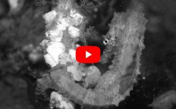 Jeanette Kamphuis - Zeepaardjes: verstoppertje spelen