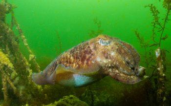 Scubapro Dives Europe: Zeeland