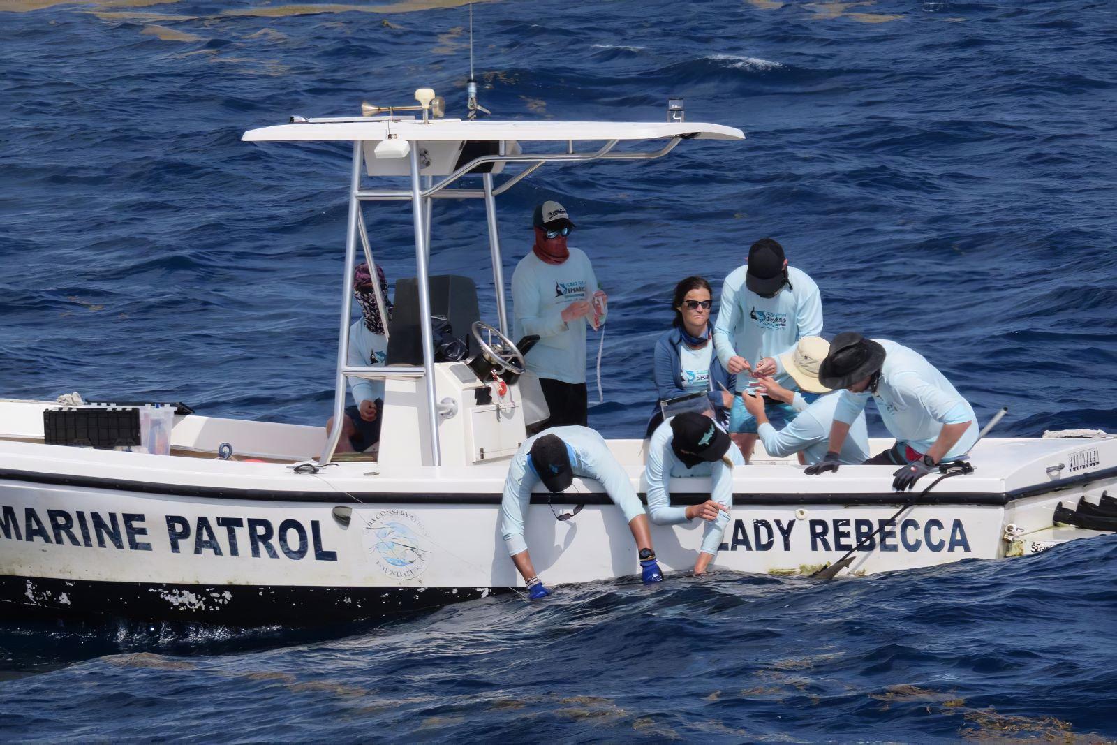 Haaien van de Saba Bank