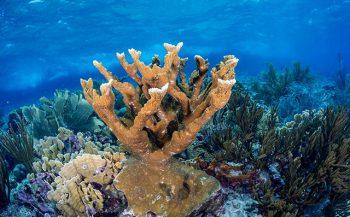 Gratis webinar: koraalriffen beschermen