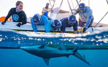 Nieuwe Caribbean Shark Coalition zet zich in voor haaien