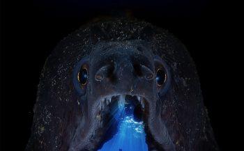UN World Oceans Day Photo Competition 2021 - Digital Ocean Photo Art