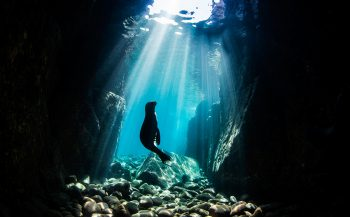 UN World Oceans Day Photo Competition 2021 - Underwater Seascapes