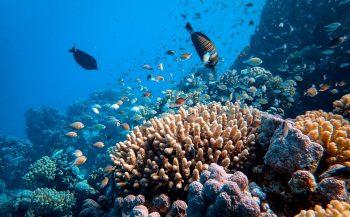 Op duikvakantie naar Egypte