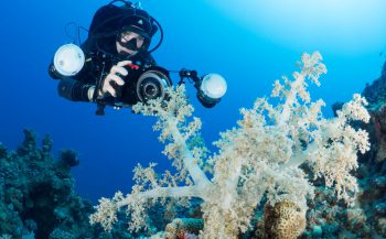 Maak kans op de ONK Shoot Out On Holiday duikreis naar Egypte!
