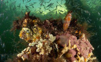 Zomerse plaatjes uit het Grevelingenmeer
