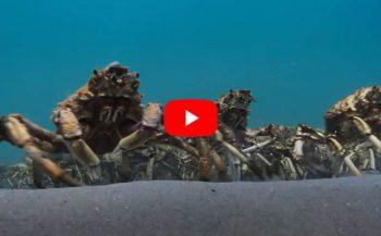 In beeld - Het krabbenleger en de pijlstaartrog