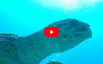 Dennis de Vlaming - Schildpadden in Egypte
