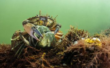 Groeten uit Nederland - De mooie wereld onder water (periode 2)