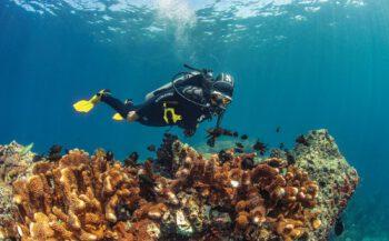 Ongekend comfortabel duiken met Everflex van Scubapro