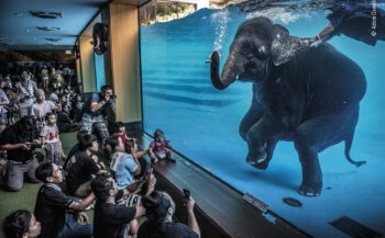 WPY 2021- Elephant in the room