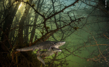 WPY 2021- Where the giant newts breed