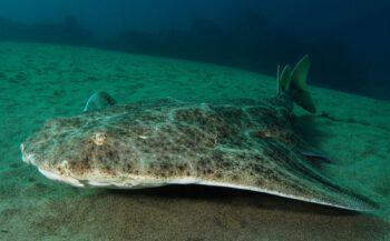 #Najaar2021 - Lanzarote met Diving World