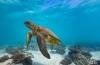 Joost Boerman - Vliegende schildpad