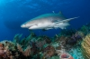 Leendert Smit - Naar de haaien (2)